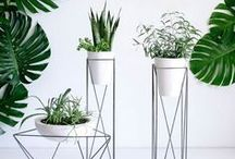 Flower pots and vases