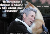 frases cachorros