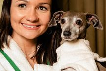 DFSpa in the News / Dog Fashion Spa featured in the news