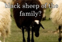 2 Black Sheep