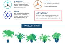 hava temizleyici bitkiler