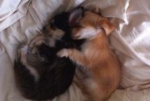 Puppies / by Danae DiPilla