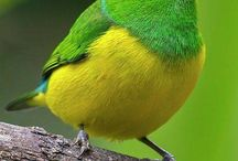 odd, beautiful birds