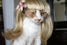 Cats with Wigs