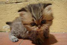 cute kitties / by Barb D'Eon