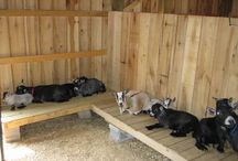 Goat shed ideas