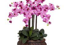 Orhidèe