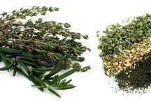 Herb Gift Ideas