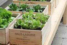 Garden Idea...