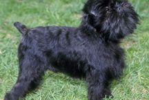 Dog Breeds from A-Z