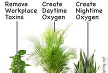 plants used to pure iñdoor ai4
