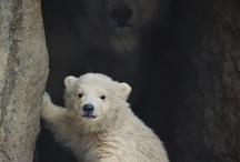 Icebear&GoodMorning