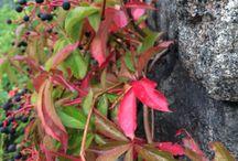 Syksy - autumn / Pidän syksystä! I Like autumn