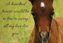 foals, colts, fillies, and cute horses
