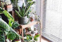 Plant Inspo