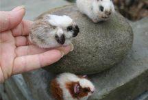 coelinha com ratinha