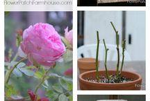 Rose stuff