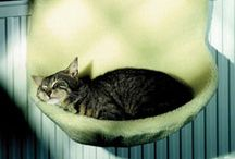 Pet Beds / Pet Beds / by Michelle Anderson