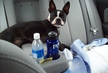 #HyundaiPet / Our owners and their favorite travel companions in their Hyundai.
