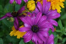 Flowers / Beautiful images of flowers