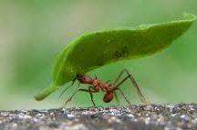 Petit mais puissant / Tout ce qui est petit n'est pas forcément faible. Preuve en est, une fourmi peut porter jusqu'à 7 fois son poids.