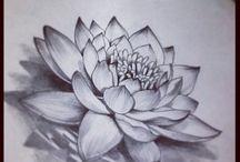lotus. chrysanthemum.cherryblossome
