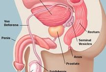 Prostate Health / by Top Male Enhancement Products