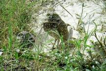 Florida Birds & Animals