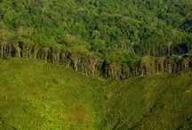 Deforestación cerca ciudad de panamá