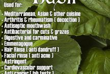 herbs with uses and benefits / by Daria D