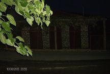 Goldenrod/ETOLOAKARNANIA/Greece