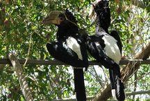 ΒΟΥΚΕΡΩΣ    (BUCEROTIDAE)   HORNBILLS / Οι HORNBILLS  (BUCEROTIDAE ) είναι μια οικογένεια των πτηνών που βρέθηκαν σε τροπικές και υποτροπικές Αφρική , την Ασία και τη Μελανησία . είναι παμφάγο, τρέφεται με φρούτα και μικρά ζώα. Είναι μονογαμικά , φωλιάζουν σε φυσικές κοιλότητες στα δέντρα και μερικές φορές σε βράχια. Μια σειρά από είδη βουκερώς απειλούνται με εξαφάνιση. WIKIPEDIA.
