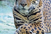 Animals / Beauty of natures creations