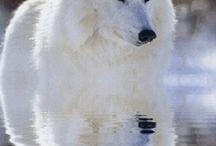 vackra vargar