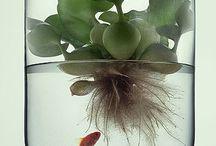 vaso di vetro con pianta