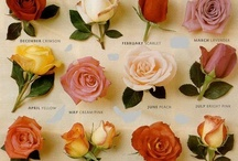 The Name of the Rose / by Kristin Hickey-Heydt