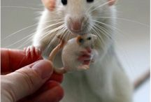 mouse <3 <3
