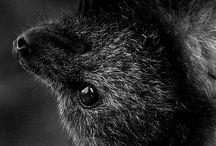 Animals / Animals photography
