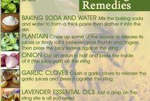Home remedies / Bee stings