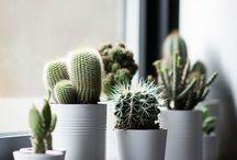 Cute succulents: the plants even I can't kill