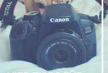Hundefotos / Schöne Hundefotos - wer will sie nicht schießen können? Hier sammle ich alle Tipps, die ich finden kann.