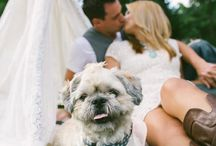 Pookie's Big Day / by Katie Russell
