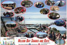 CM17039 Nelson Bay Sharks & Rays