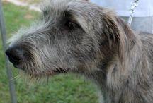 4 Zampe in Passerella...al Centro Commerciale Megliadino / A dog show with all sorts of dogs! Great day! / Una sfilata cinofila... con tutti i tipi di cani! Bellissima giornata