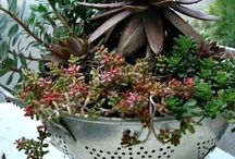 awesome arrangements 4 succulants.