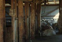 Shearing sheds
