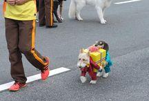 Best Pet Costumes Ever / Pet costumes