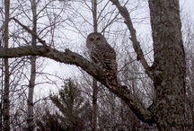 Wildlife & Nature / Wildlife, Nature and Scenic Shots.