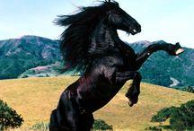 Nuestro gran amigo el caballo