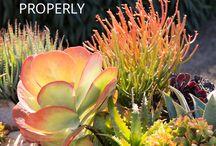 Succulent - tips